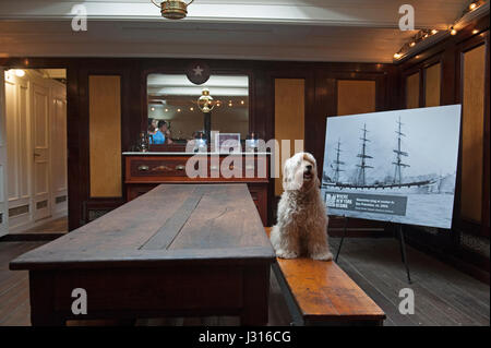A dog sits in the captain's saloon on the 1885 cargo sailing ship Wavertree, which belongs to the South Street Seaport - Stock Photo