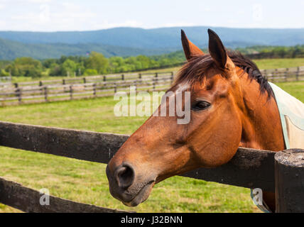 Head of a brown horse in a meadow leaning on a wooden fence with hills in background - Stock Photo