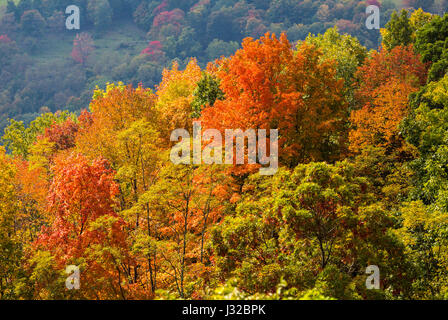 Autumn fall leaves in the Monongahela National Forest, Allegheny Mountains, West Virginia, USA with hills in the - Stock Photo