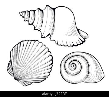 how to draw a realistic snail shell