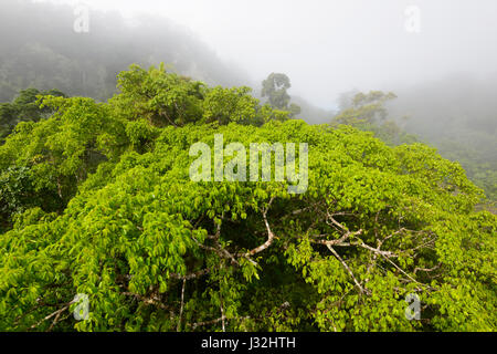Clouds over pristine tropical rainforest canopy seen from Skyrail, near Cairns, Far North Queensland, FNQ, QLD, - Stock Photo