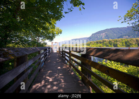 Wooden boards shalt platform with railings leading to the river to the pier. Platform passes through shady green - Stock Photo