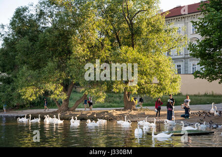 PRAGUE, CZECH REPUBLIC, JULY 5, 2016: People feeding and taking photos of swans by the riverside of Vltava River - Stock Photo