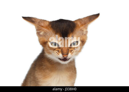 Portrait of Angry Kitten on Isolated White Background - Stock Photo