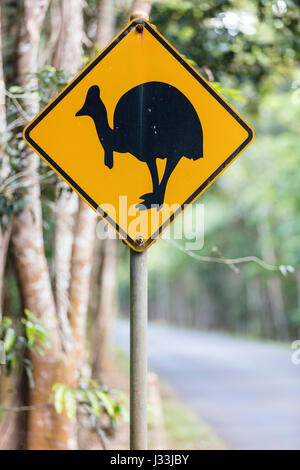 Warning sign on the side of the road, Southern cassowary (Casuarius casuarius), Daintree National Park, Queensland, - Stock Photo