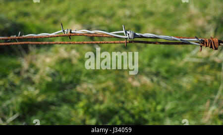 a close up detail new and old rusty barbed wired with grass background - Stock Photo