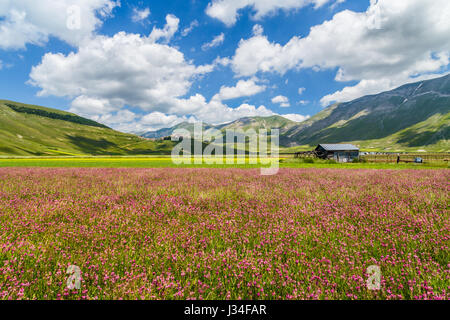 Beautiful summer landscape at Piano Grande (Great Plain) mountain plateau in the Apennine Mountains, Castelluccio - Stock Photo