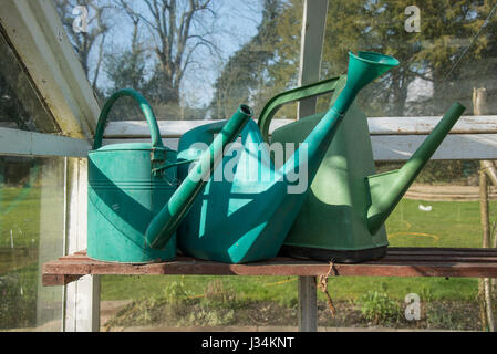 Three plastic watering cans in a greenhouse, Chipping, Lancashire. - Stock Photo