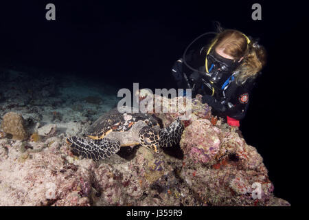 Female scuba diver and Hawksbill sea turtle (Eretmochelys imbricata) in the night, Indian Ocean, Maldives - Stock Photo