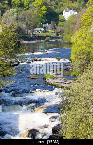 The River Dee passing through an Area of Outstanding Natural Beauty at Llangollen in North Wales in the height of - Stock Photo