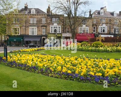 The beautiful planting of primulas and tulips on the Crown roundabout in the Montpellier district of Harrogate, - Stock Photo