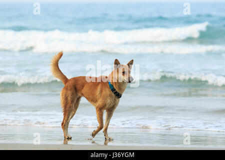 face of street dog standing on sand beach - Stock Photo