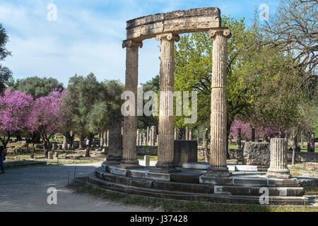 The philippeion at Olympia at  springtime with the judas trees in bloom.  Ancient Olympia, Peloponnese, Greece. - Stock Photo