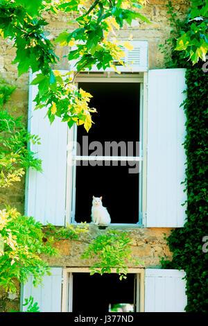 Cat sitting on windowsill. - Stock Photo