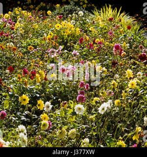 Flowering plants in garden. - Stock Photo