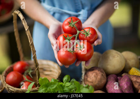 Mid section of woman holding tomatoes on palm - Stock Photo