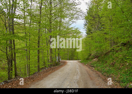 Narrow gravel road going through a deciduous forest - Stock Photo