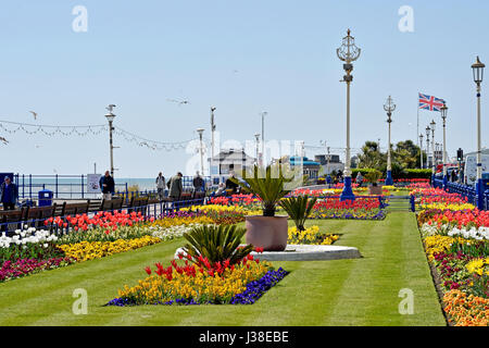 Beautiful tulips and Spring flowers on display alond Eastbourne seafront East Sussex UK - Stock Photo