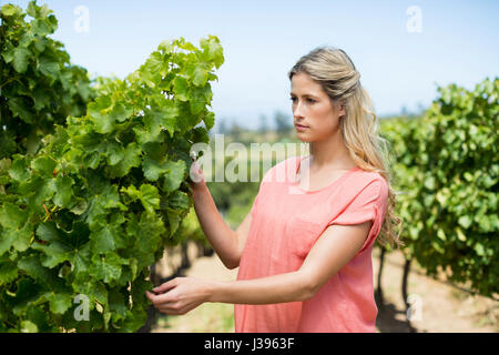 Thoughtful young woman standing by plant growing at vineyard - Stock Photo
