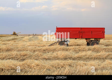 Harvester is working in the field during harvest time - Stock Photo