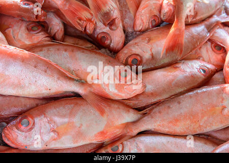 A pile of freshly caught red snapper on sale at the fish market in Thalassery (Tellicherry), Kannur Cannanore), - Stock Photo