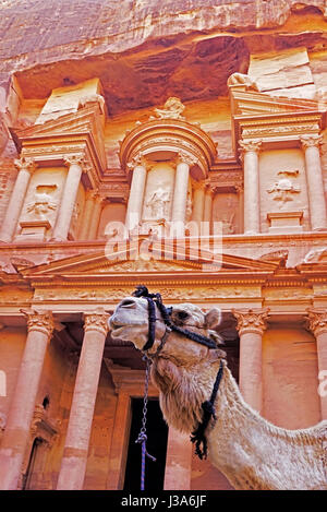Camel in front of The Treasury at Petra. - Stock Photo