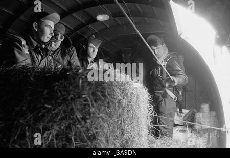 '''Hay airlift'' for endangered wild animals in the Bavarian Mountains, 1952' - Stock Photo