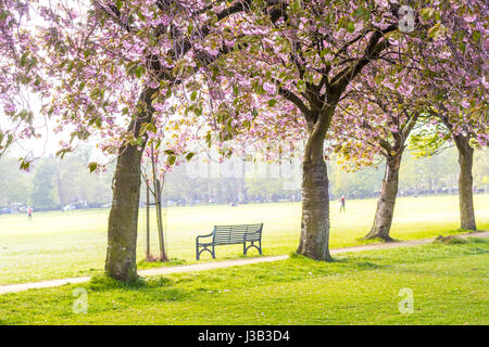 The Meadows, Edinburgh, Scotland, UK. 4th May, 2017. UK Weather. People walking and relaxing in the sunshine among - Stock Photo