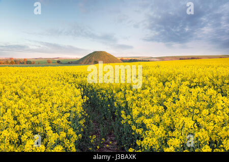 A filed of flowering mustard at Silbury Hill near Avebury in Wiltshire - Stock Photo