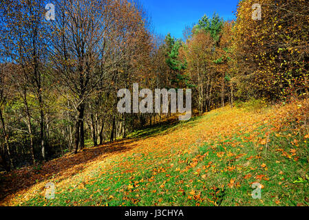 birch forest in sunny afternoon while autumn season. - Stock Photo