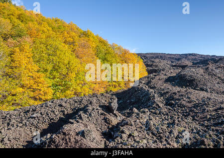 Lava field around the rest of the forest showing flow from eruption of Mount Etna, the tallest active volcano in - Stock Photo