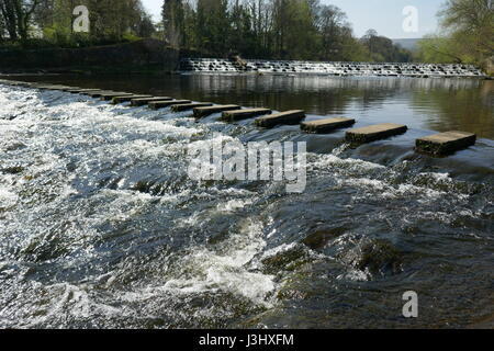 stepping Stones across River Wharfe Burley in Wharfedale - Stock Photo