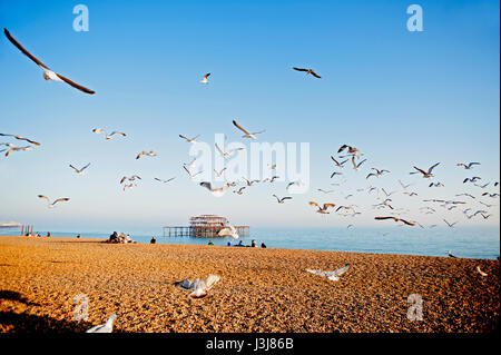 A flock of seagulls flies over Brighton beach on the south coast of England with the ruins of the famous West Pier - Stock Photo
