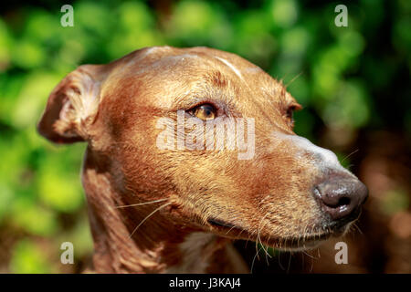 Close-up of andalusian hound dog with shampoo over its head and snout - Stock Photo