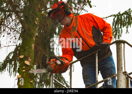 Woodcutter cutting tree with a chainsaw. - Stock Photo