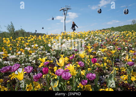Berlin, Germany. 7th May, 2017. A field of flowers during the International Gerden Exhibition (IGA) in Berlin, Germany, - Stock Photo