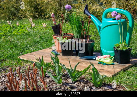 Gardening tools and spring flowers on wooden background in garden - Stock Photo