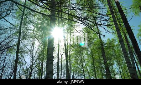 Lovely Sunset behind the Forrest in Kursk. - Stock Photo