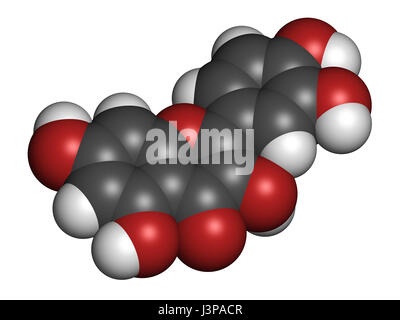 Quercetin plant molecule. Atoms are represented as spheres with conventional color coding: hydrogen (white), carbon - Stock Photo
