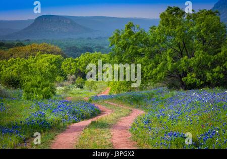 Bluebonnets along country road in the Texas Hill Country around Llano. Lupinus texensis, the Texas bluebonnet, is - Stock Photo
