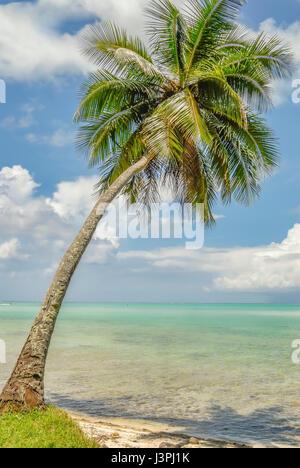 Single Palm Tree in the blue sky of Bora Bora French Polynesia - Stock Photo