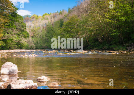 River Ure flowing through Hackfall Wood, North Yorkshire, England - Stock Photo