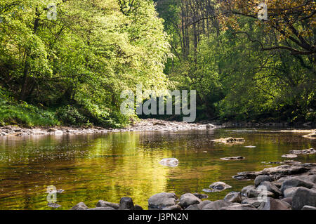 River Ure flowing through Hackfall Wood, North Yorkshire, England. 05 May 2017 - Stock Photo