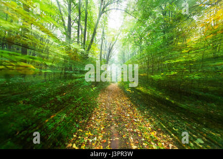 Forest trails and the effect of rapid passages. - Stock Photo