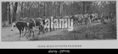 Journey through Eucalyptus Forest 1901 Korensky - Stock Photo