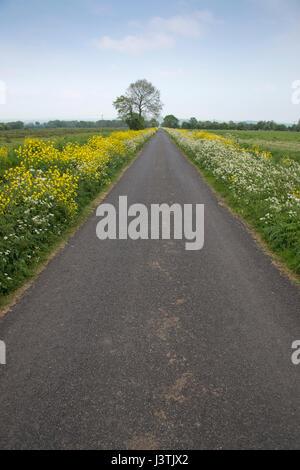 A long straight road, near Glastonbury, Somerset Levels, UK. - Stock Photo