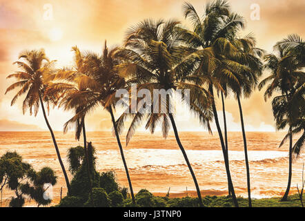Palm trees at sunset light. Goa. India vintage style photo. Instagram filter.Serenity tropical beach. - Stock Photo