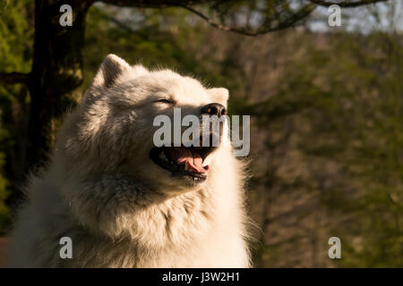 The photo of smiled adorable dog. - Stock Photo