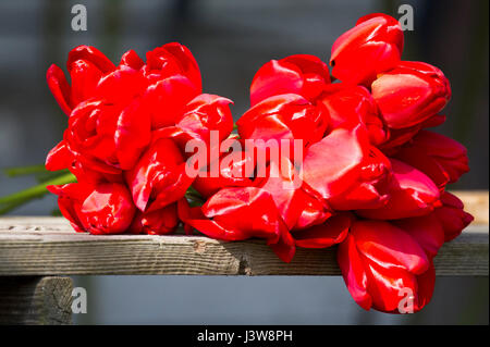 Red tulips on the bench, Poland 6 May 2017 © Wojciech Strozyk / Alamy Stock Photo - Stock Photo