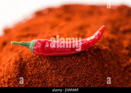 chili red hot pepper, concept of popular spice - closeup on delicious juicy pod of chili red pepper isolated over - Stock Photo